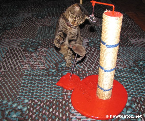 prevent a cat from scratching furniture - How to A to Z